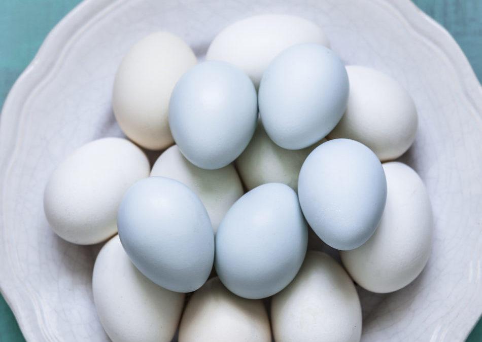 Perchè vogliamo mangiare l'uOvO azzurro?