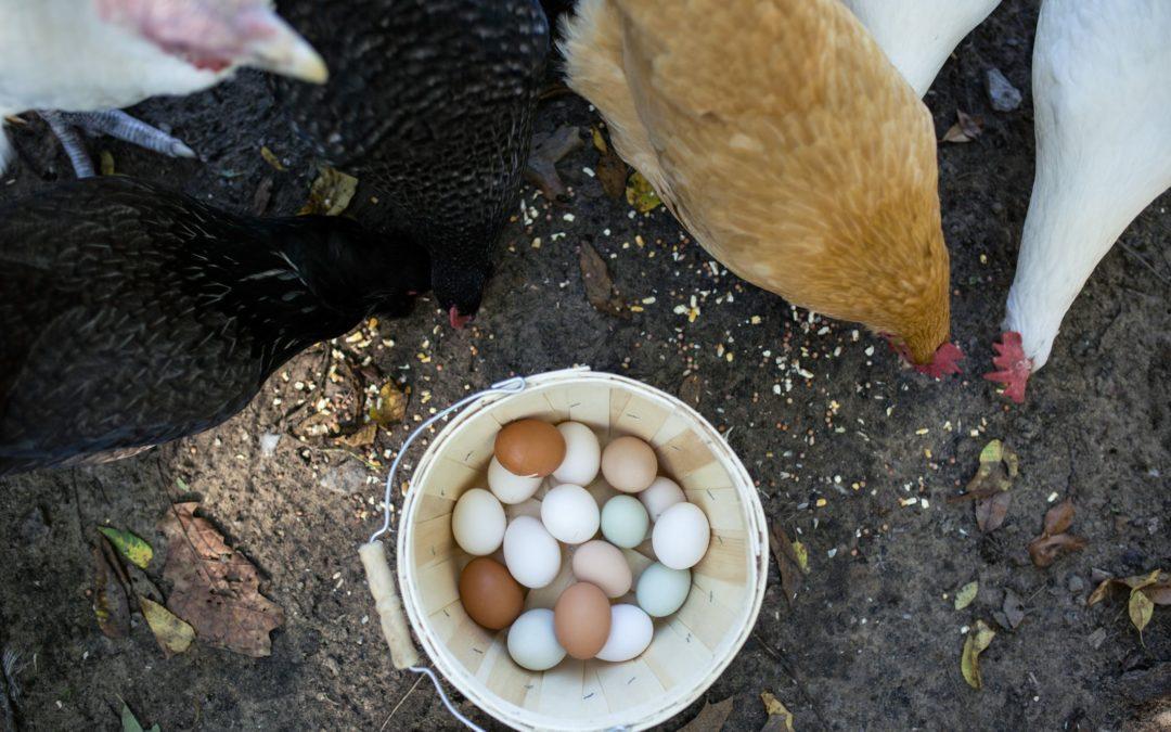 E' una mania….l'uovo azzurro!